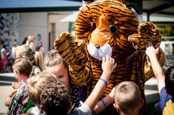Our Terrific Tiger giving high fives!